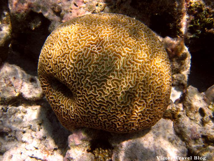 Underwater life of Vilamendhoo, Maldives. Corals.
