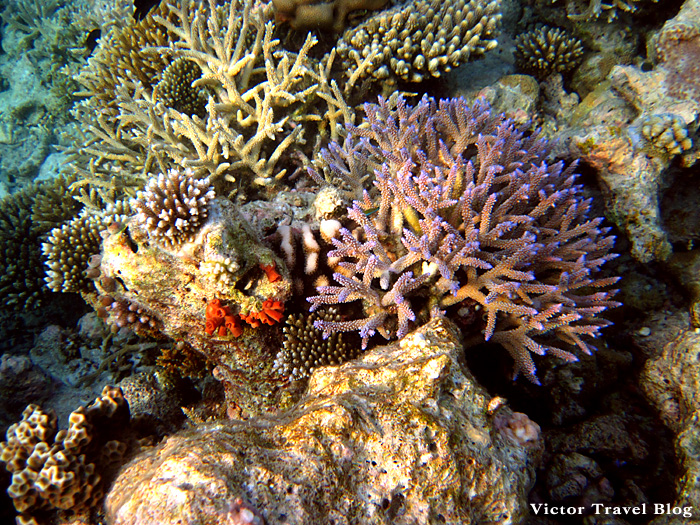 Underwater life of Vilamendhoo corals