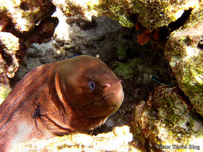 Underwater photos from the Maldives