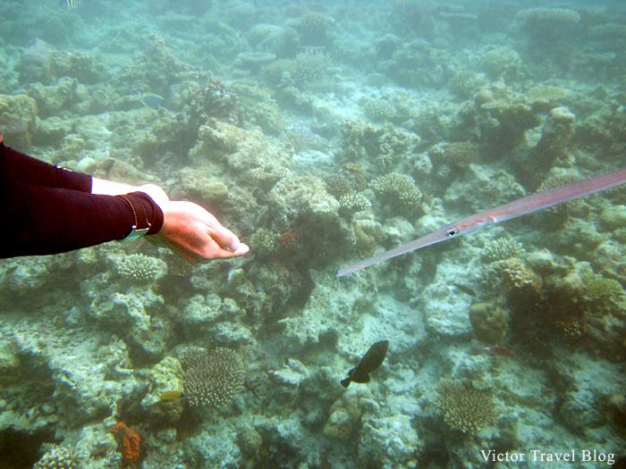 Underwater photos from Maldives