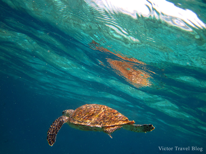 Aquatic turtle. The Maldives. The Indian Ocean.