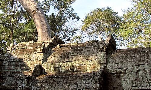 Cambodia Temple Ta Prohm