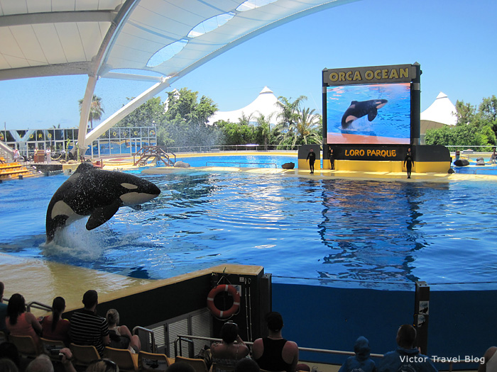 Orca show in the Loro Parque, Tenerife, Canary.