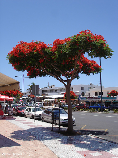 Adeje, Tenerife, Canary Islands.