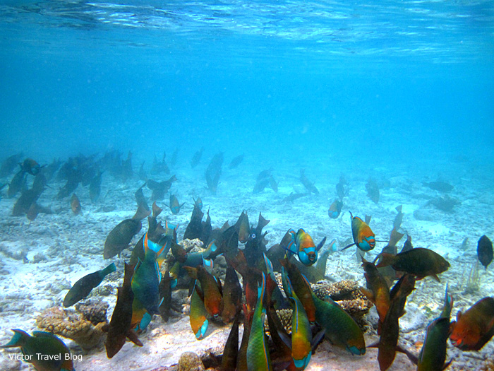 Underwater life of the Red Sea, Egypt.