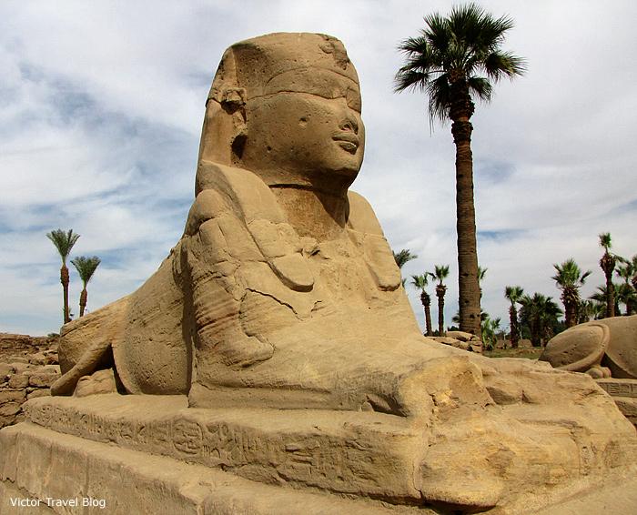 Sphinx,  Luxor Temple