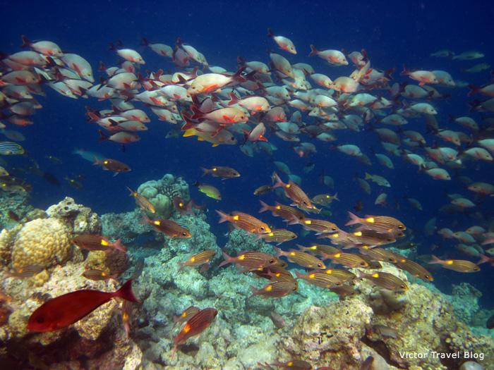 Underwater life of Reethi Beach Resort