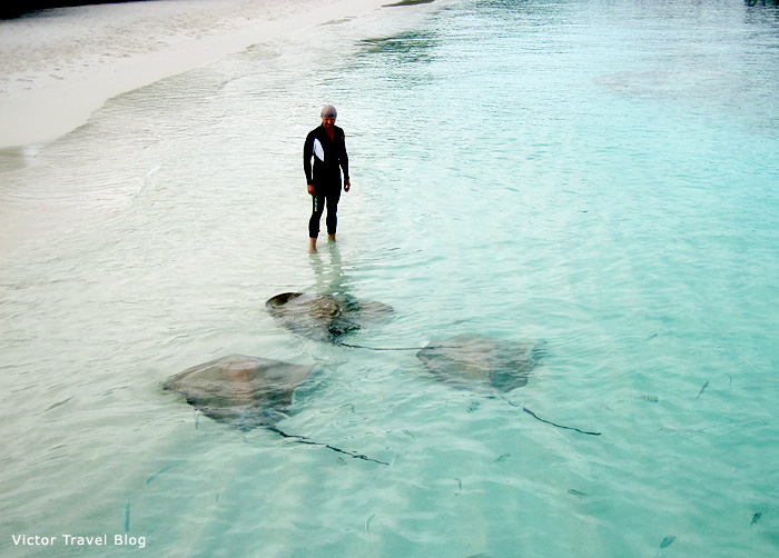 Stingrays at Reethi Beach Resort, the Maldives.
