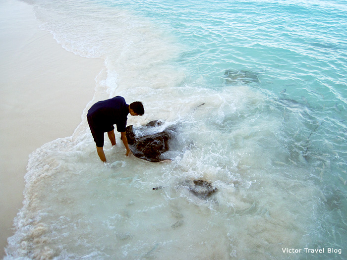 Stingrays at Reethi Beach, the Maldives.