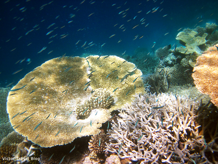 Reef of Vilamendhoo Island Resort