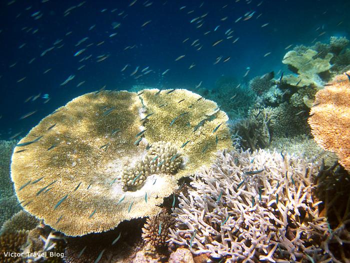 Reef of Vilamendhoo Island Resort