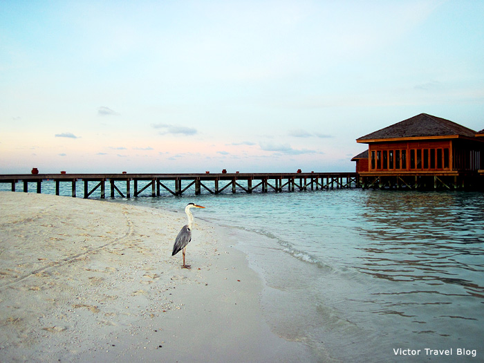 The Vilamendhoo Island Resort