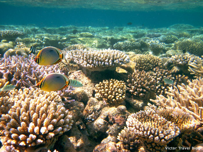 The coral reef of Vilamendhoo Island Resort