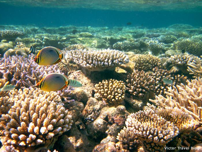 The coral reef of Vilamendhoo Island Resort
