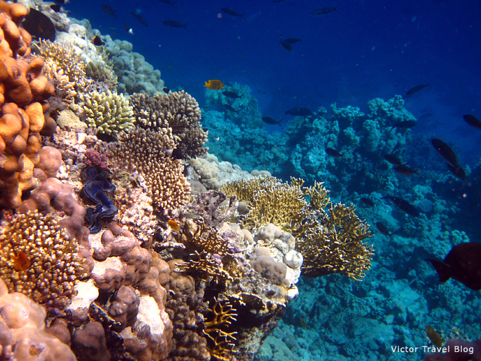 A coral reef of Taba Heights, Egypt.