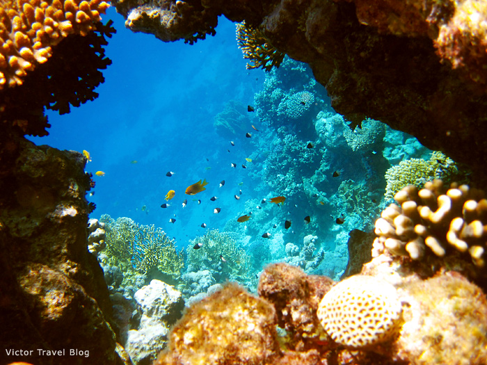 Taba Heights coral reef, Red Sea, Egypt.
