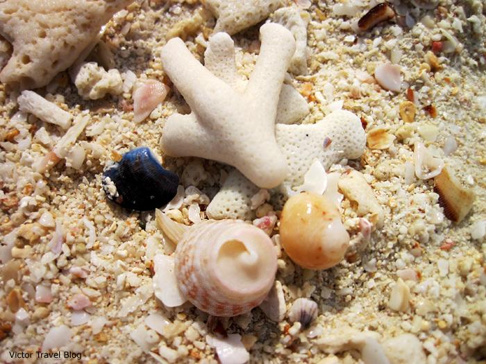 Corals of Andaman Sea. Phuket, Thailand.