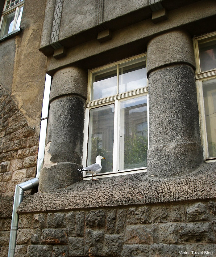 Seagull near window. Rigam Latvia.