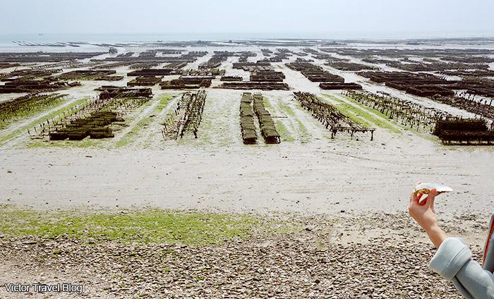 Oyster farm. Cancale, France.