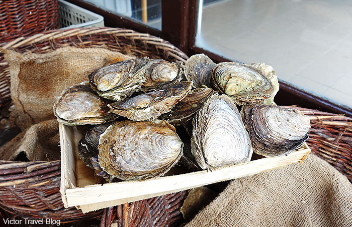 Oysters Pied-de-cheval. Cancale, France.