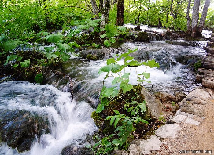 Upper Lakes. Plitvice Lake National Park. Croatia.