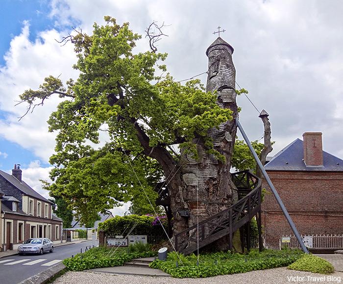 Chapelle Notre Dame de la Paix inside of the oak tree. Allouville, France. The oak tree is between 800 and 1,200 years old.