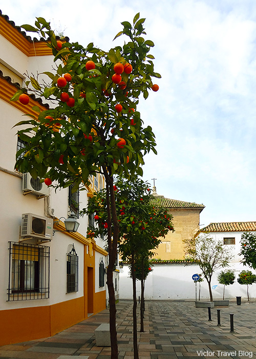 One of the Cordoba's street in February. Spain.