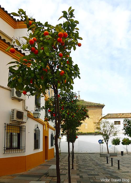 One of the Cordoba's street in February. Spain.