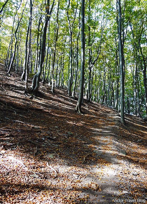 The forest around Bezdez Castle. Bohemia, Czechia.