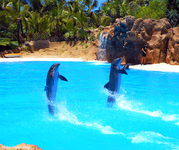 Dolphins show in Loro Park. The island of Tenerife, Canary Islands, Spain.