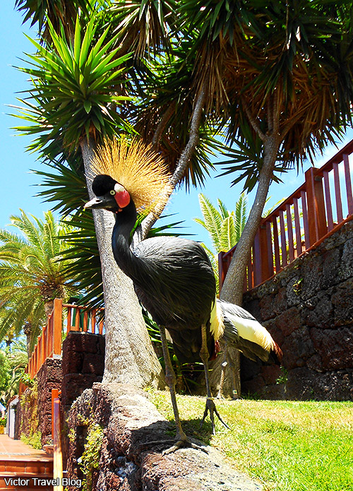 Paradise birds in Loro Park. Island of Tenerife, Canary Islands, Spain.