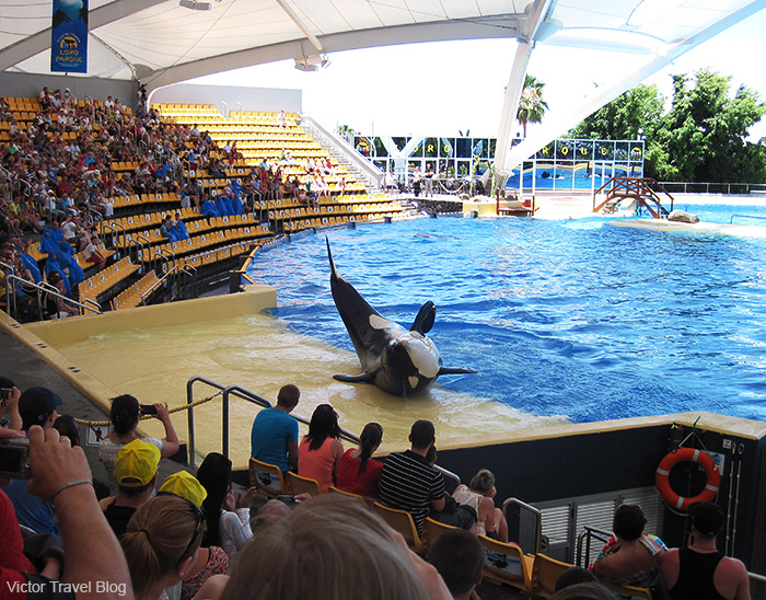 Orca show in Loro Park. The island of Tenerife, Canary Islands, Spain.