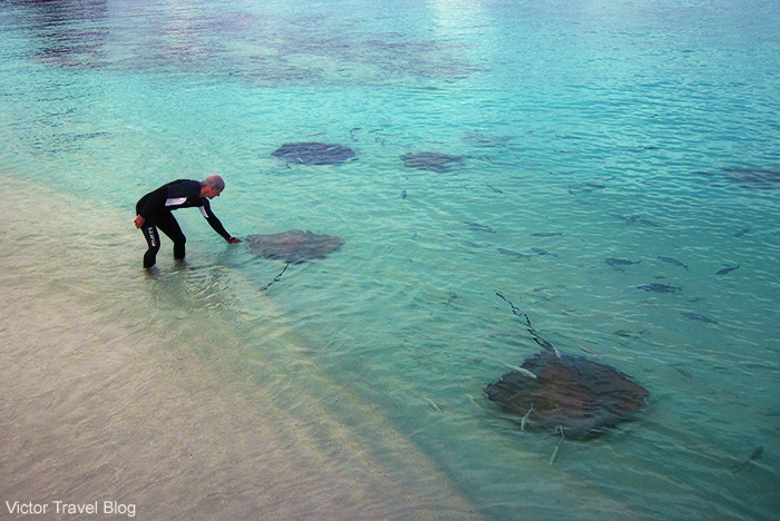 I patted a stingray. Reethi Beach. The Maldives.
