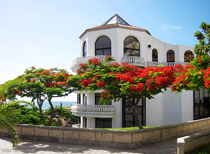 The town of Adeje. The island of Tenerife, Canary Islands, Spain.