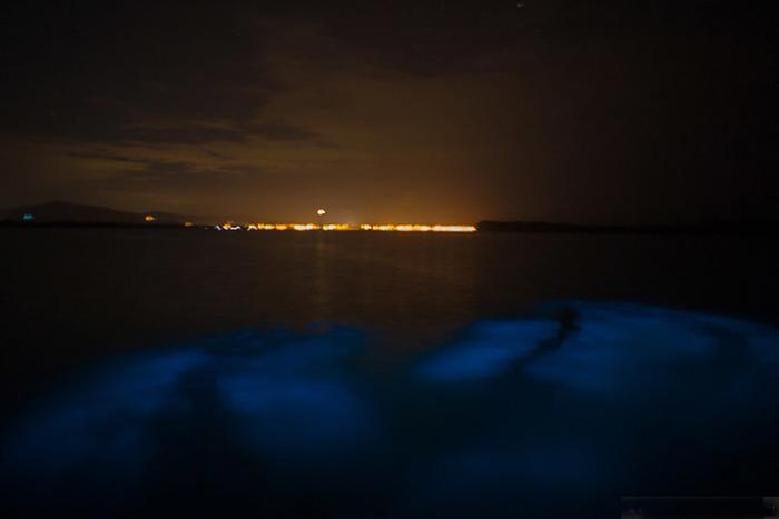 Luminous Lagoon. Jamaica.