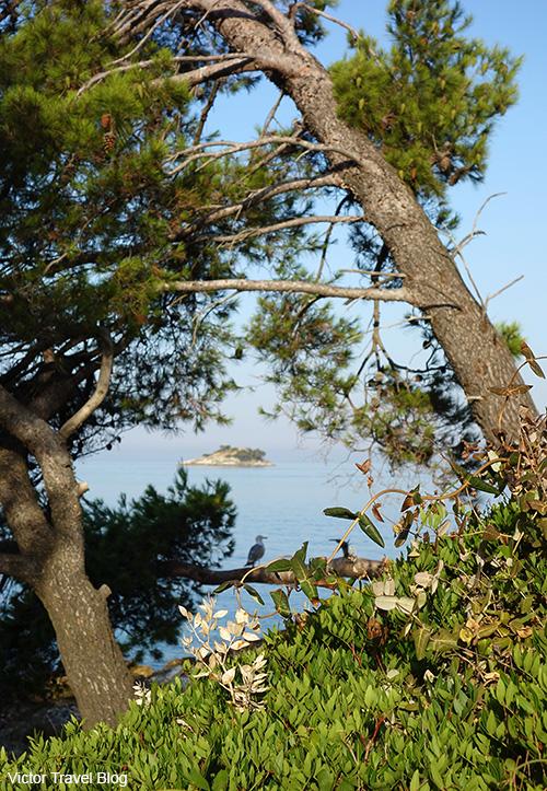 The island Sveta Katarina. Rovinj, Croatia.