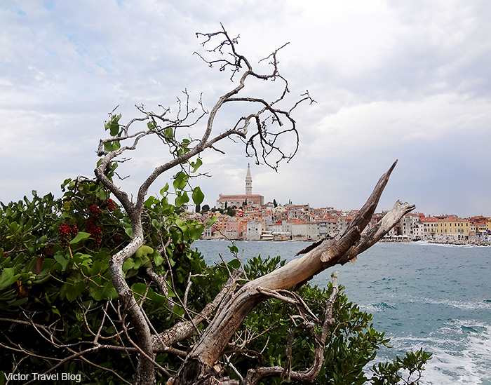 View of Rovinj from Sveta Katarina Island, Croatia.
