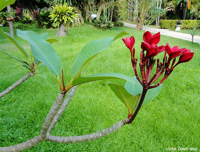 The garden of Fair House Villas. Koh Samui. Thailand.