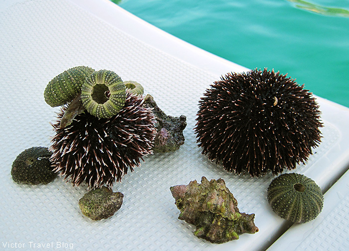 Sea urchins. The Adriatic Sea, Croatia.