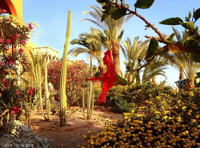 el-gouna-egypt-red-sea-garden-resort-52