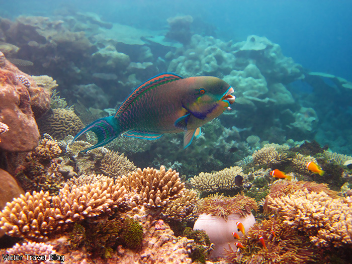 Underwater life of the Maldives. The island of Funamadua, Gaafu Alifu Atoll.