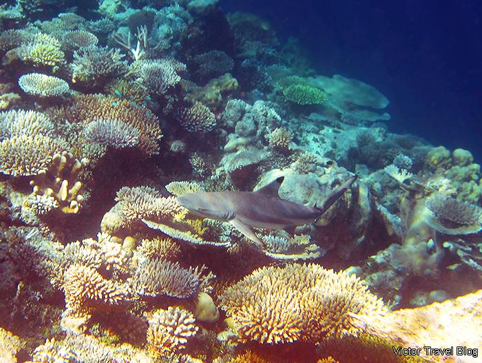Underwater life of the Maldives. The island of Funamadua, Gaafu Alifu Atoll.