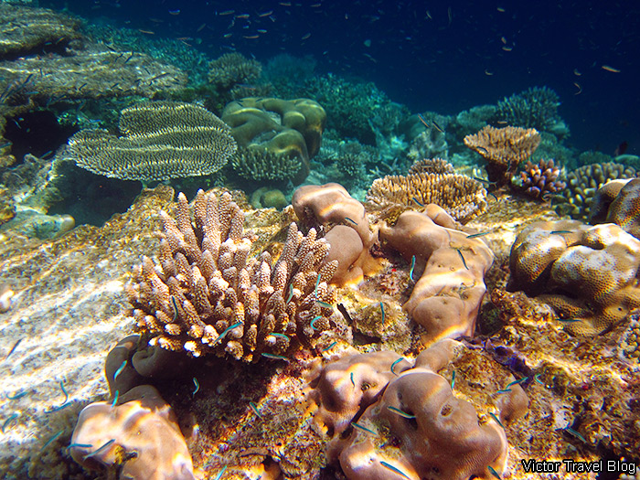 Coral Reef of the Robinson Club Maldives.