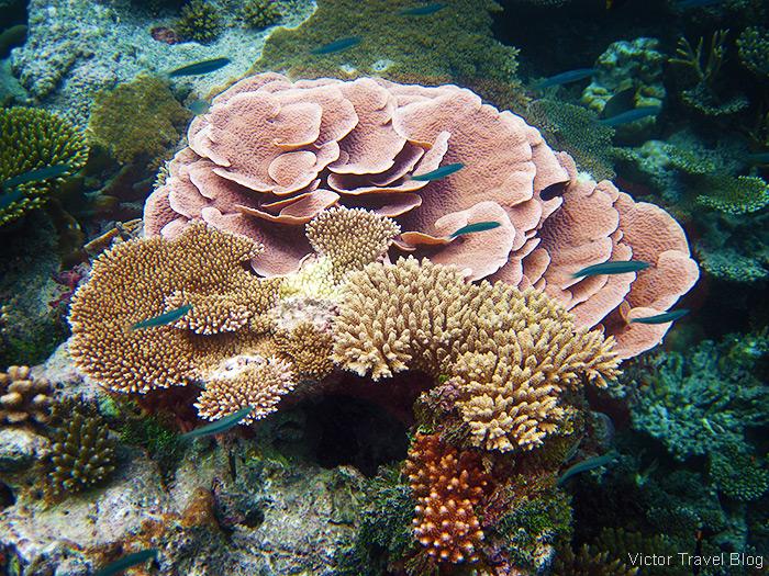 Coral Reef of the Robinson Club Maldives.