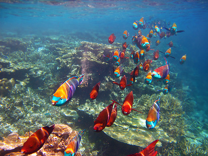 Coral Reef of the Robinson Club Maldives. The island of Funamadua, Gaafu Alifu Atoll.