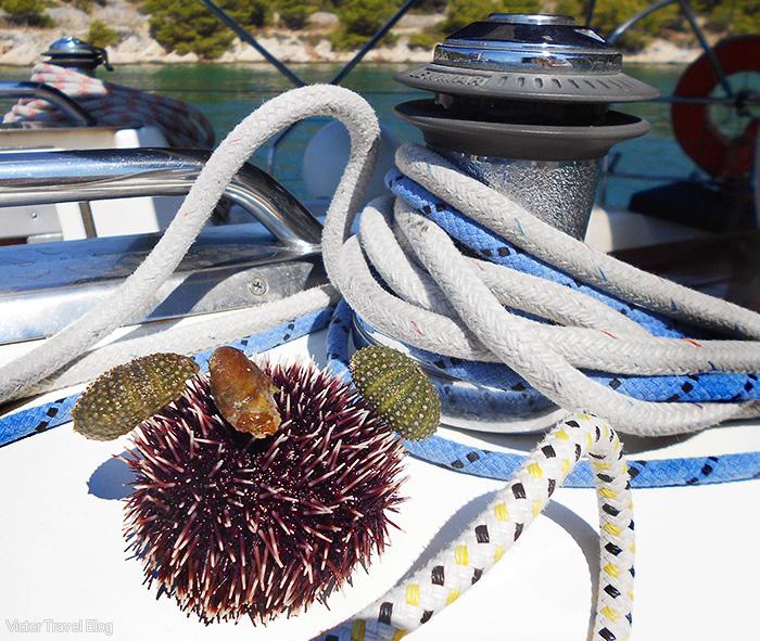 Sea urchin. The island of Rhodes, Greece.