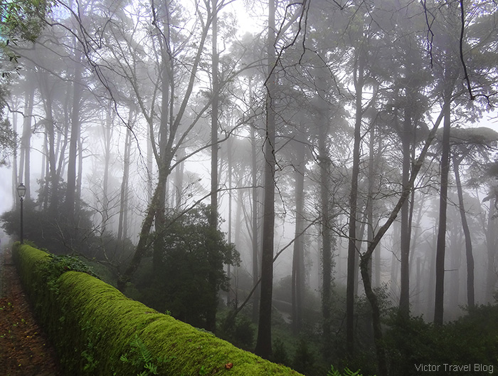 Pena Park in fog. Sintra, Portugal.