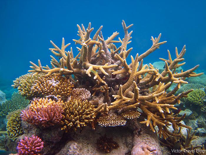 The coral reef of the island of Funamadua, Gaafu Alifu Atoll, the Maldives.