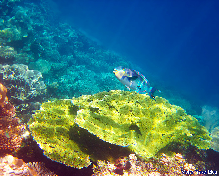 Coral reef of the Maldives.