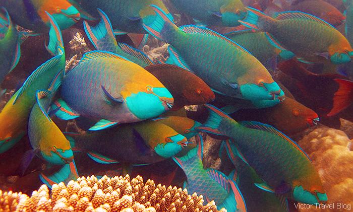Snorkeling on the Maldives.